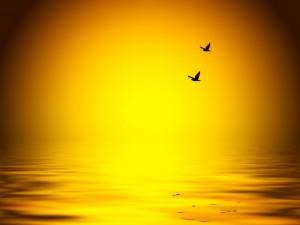 birds-flying-over-water
