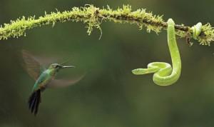 facing fear bird and snake