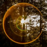 circle of light in forest
