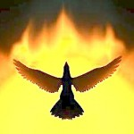 phoenixbirdphoto copy