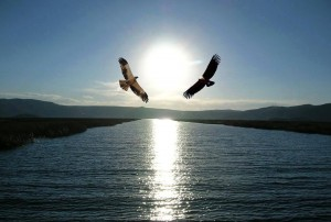 two eagles over water