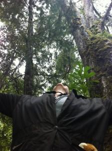 phoenix looking up to elder huon pines tarkine 2015